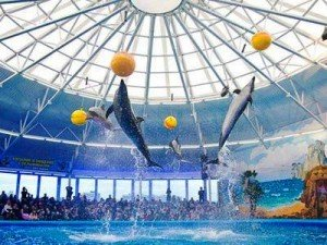 Nemo Dolphinarium in Minsk. Photo via Minsktourism.By
