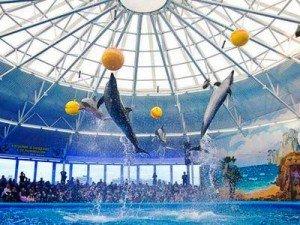 Nemo Dolphinarium in Minsk. Photo via Minsktourism.By