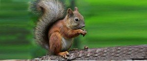 Visitors are welcomed by a real squirrel
