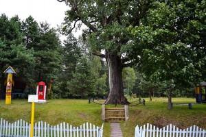 The Famous Oak
